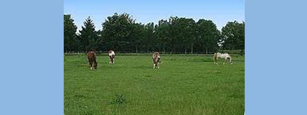EVO Sporthorses
